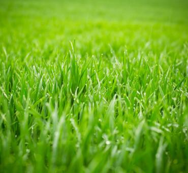 Obtenir un sol plus humifère