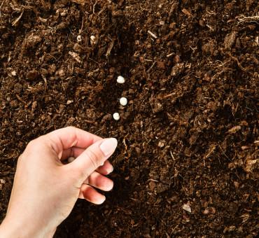 La récolte des graines de jardin