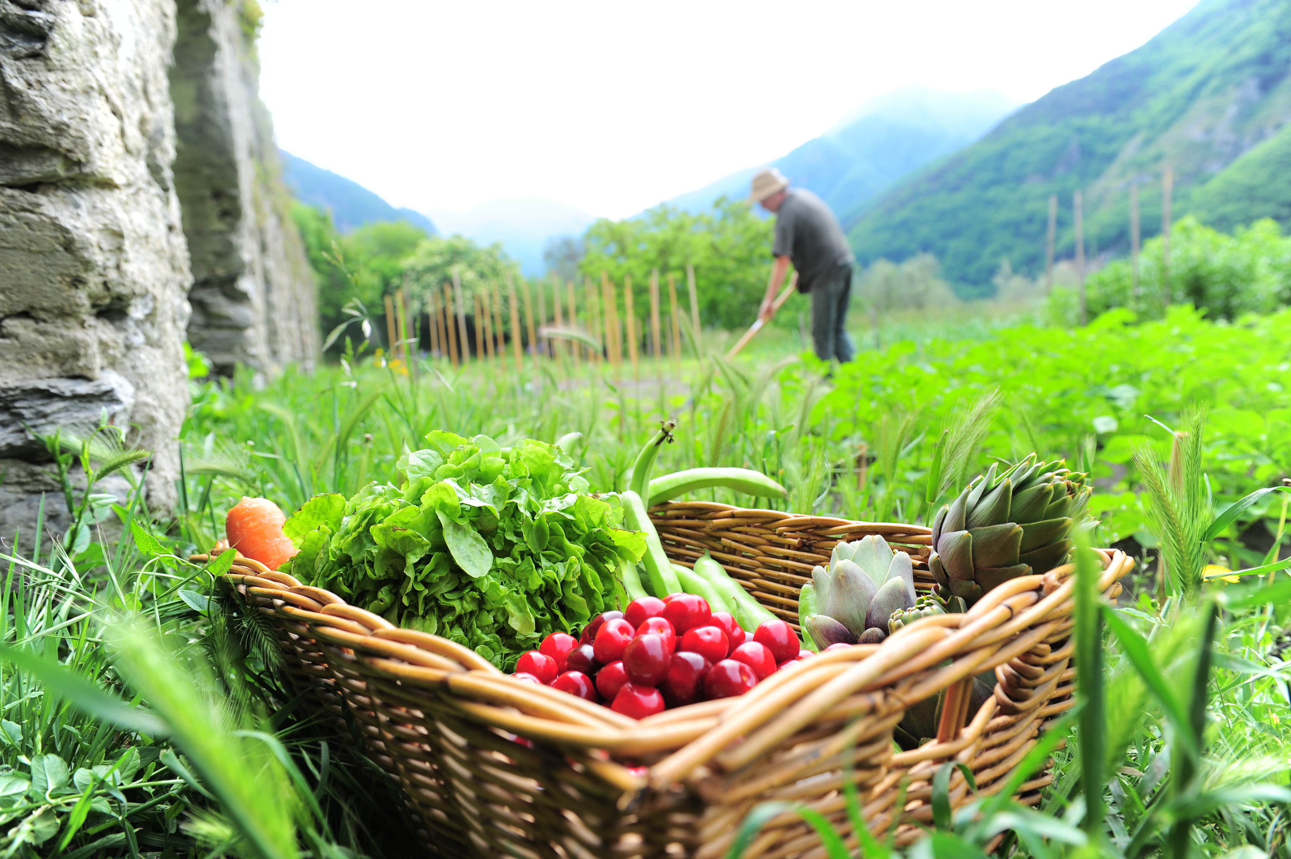 La fantaisie des légumes du potager - Les Jardins du Clos Joli