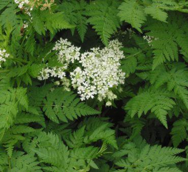 Cultiver des plantes condimentaires dans votre jardin