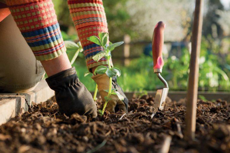 Le jardinage pour les paresseux
