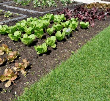 Choix des légumes en fonction du sol