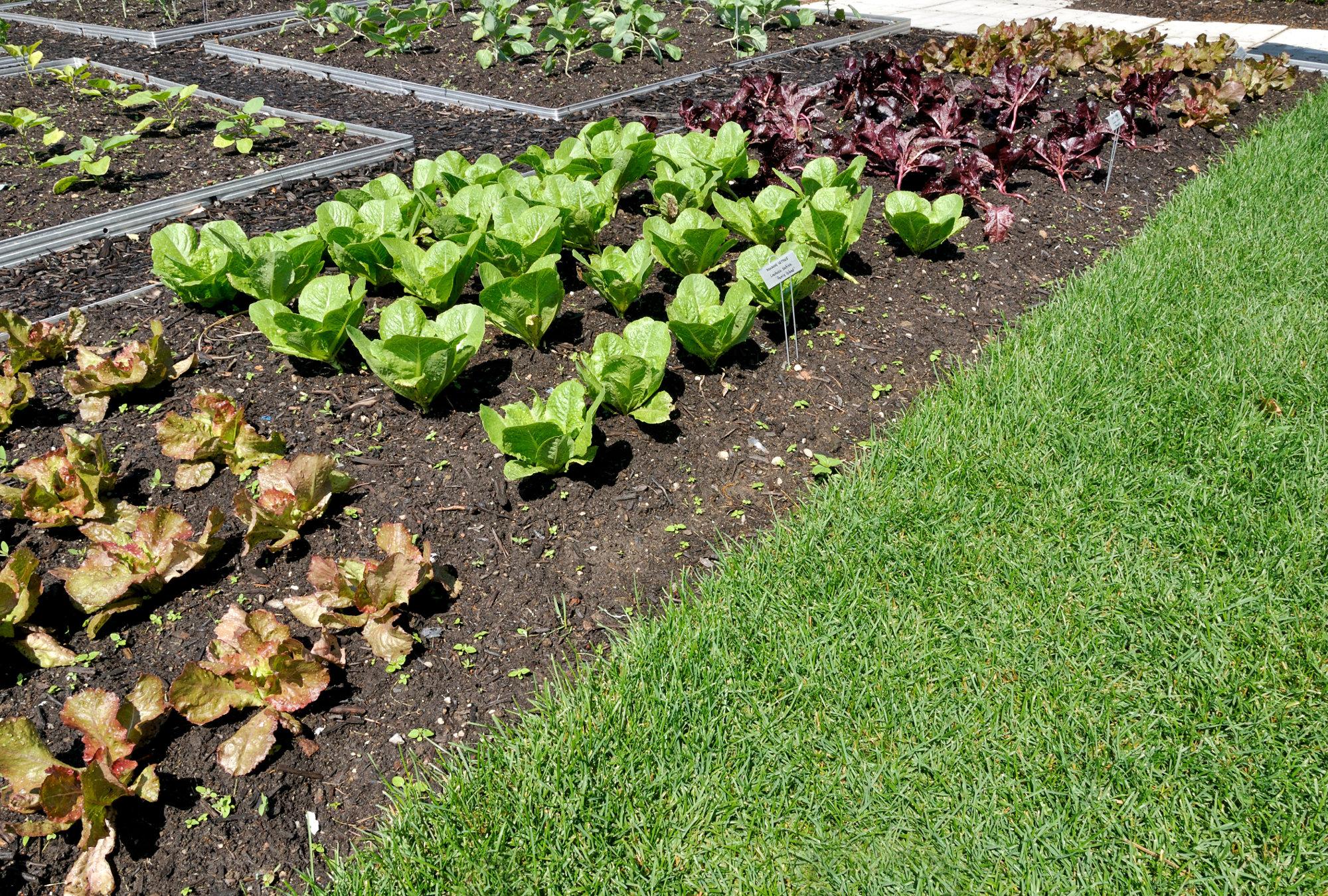 Comment Aménager Son Jardin Potager – Acorelis.info