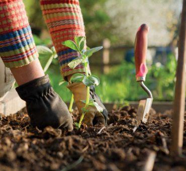 Comment se lancer dans le jardinage?