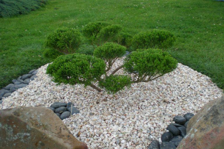 Orner vos murets en pierres de belles plantes