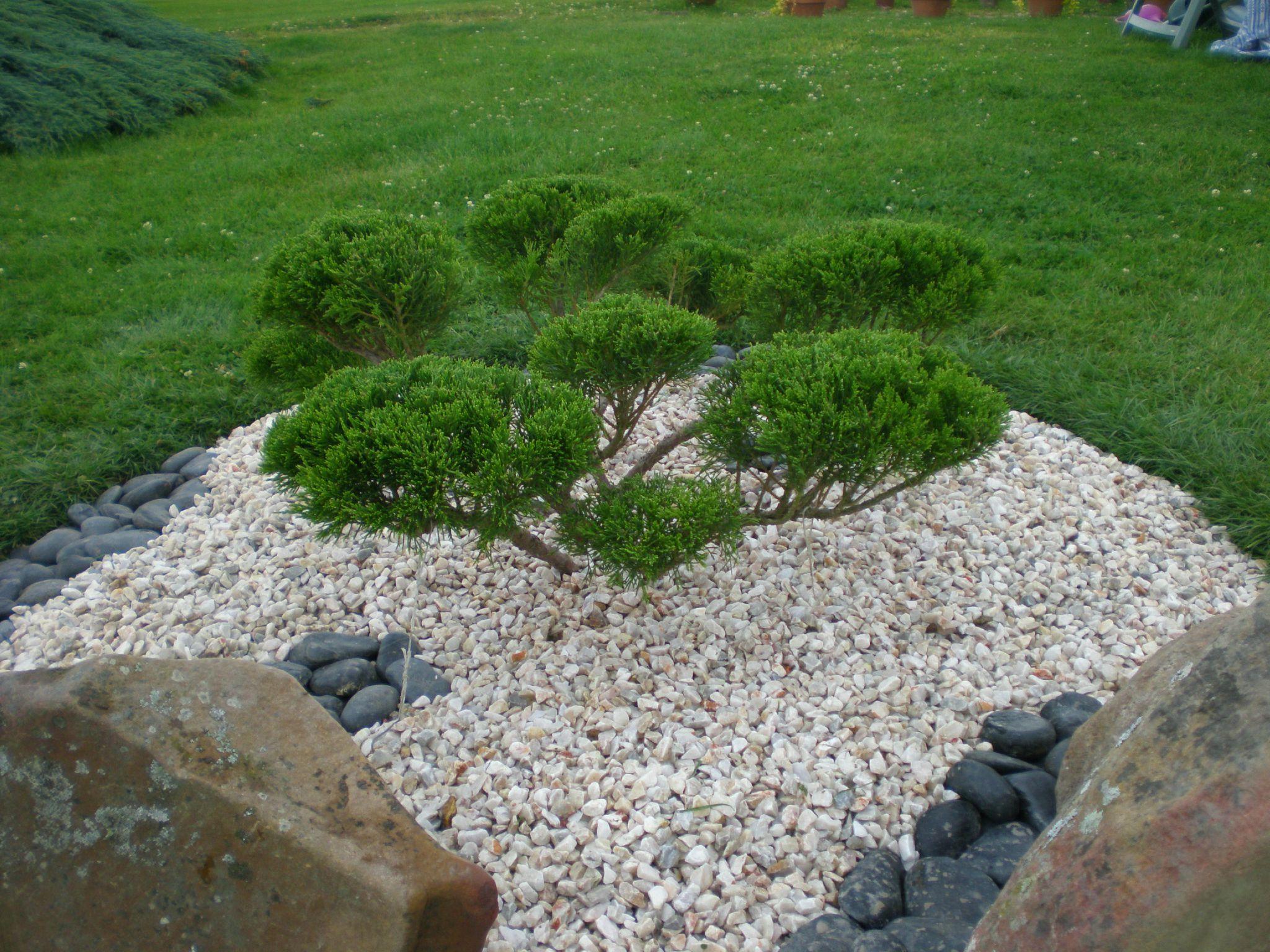 Orner vos murets en pierres de belles plantes - Les Jardins ...