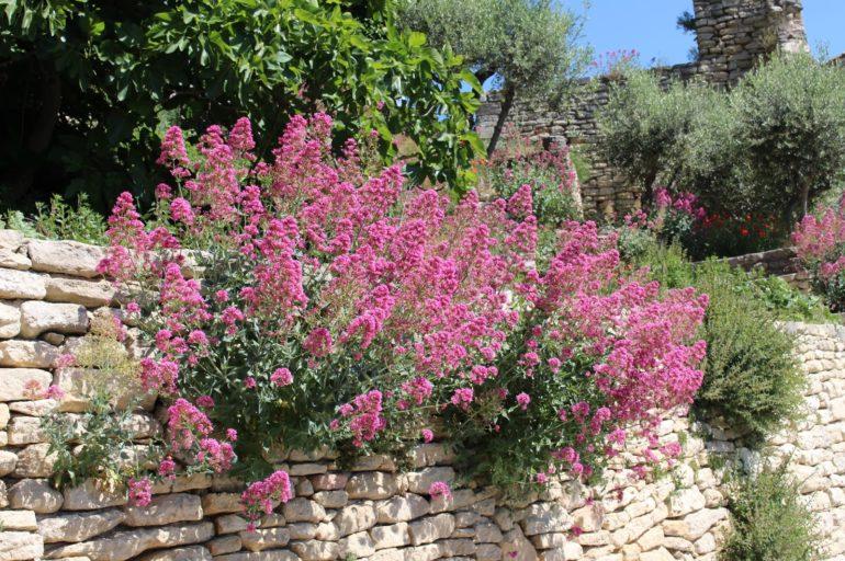 Orner de belles fleurs vos murets en pierres