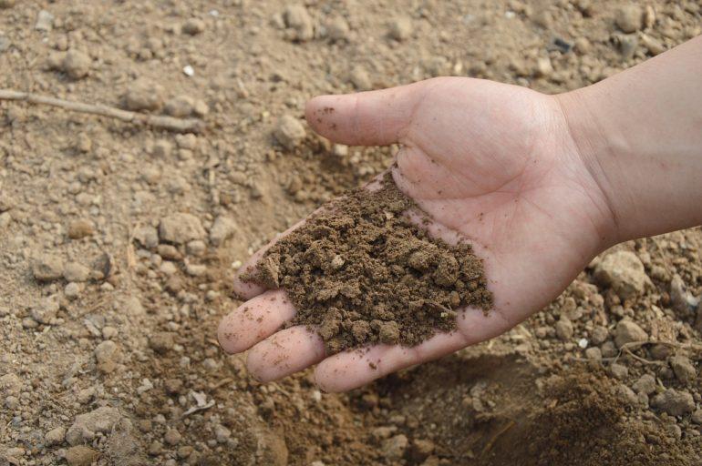 Connaître la nature du sol de votre potager