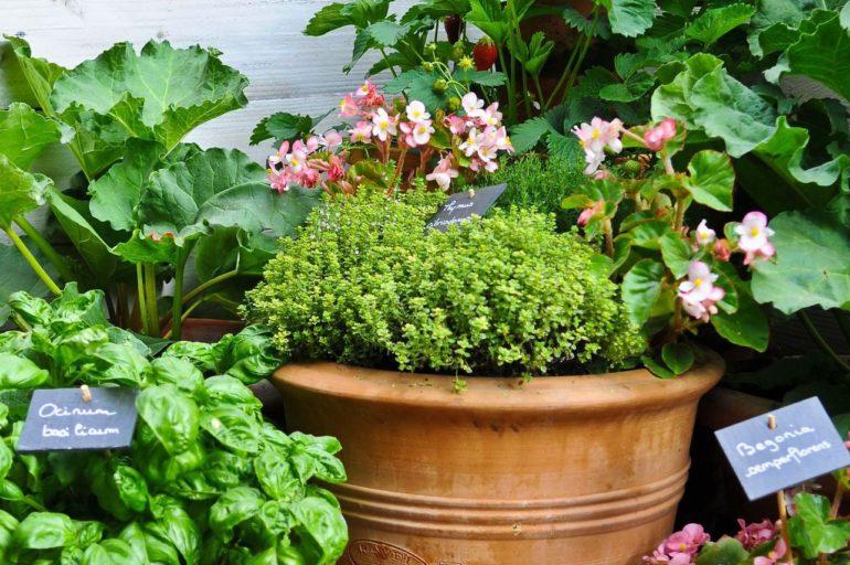 Adopter le jardinage biologique
