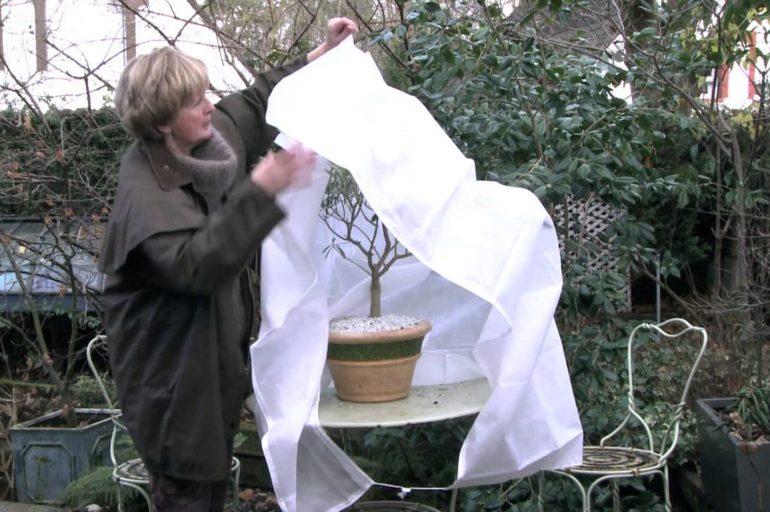 Voile d'hivernage : une protection sûre pour vos plantes