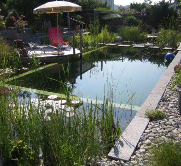 L'entretien d'une piscine naturelle