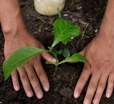 Quelques astuces concernant la plantation d'un arbre