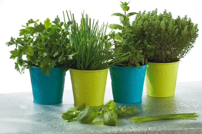 Les plantes aromatiques à ne pas rater