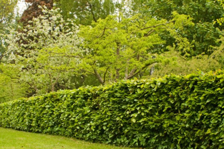 Pourquoi utiliser une taille haie thermique dans son jardin ?