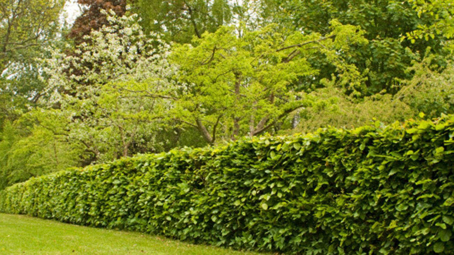 Pourquoi utiliser une taille haie thermique dans son for Joli jardin sans entretien
