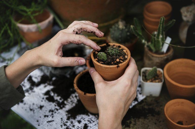 Comment réduire le pH du sol ?