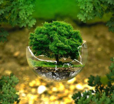 Planter des arbres peut-il atténuer le changement climatique ?