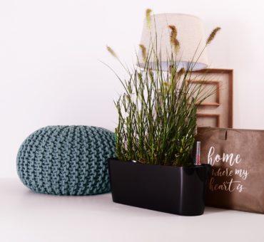 Quelques conseils pour installer un jardin d'intérieur