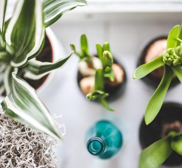 Quelques conseils pour intégrer des plantes d'intérieur