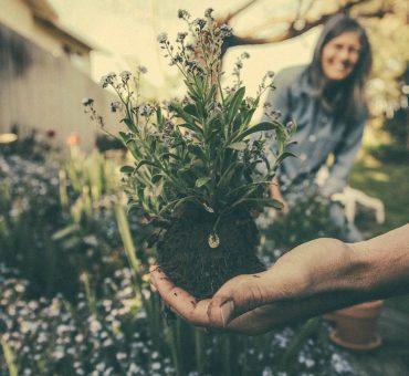 Comment réduire le temps consacré à l'entretien de votre jardin ?
